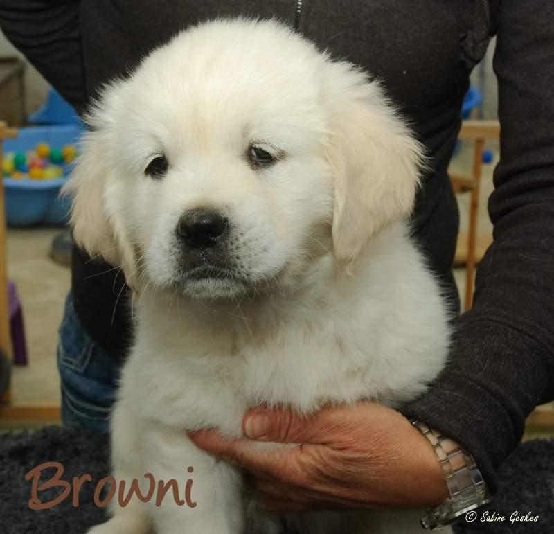Browni2