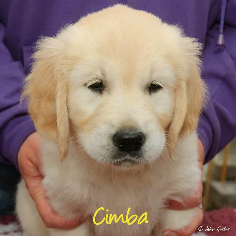 Cimba2