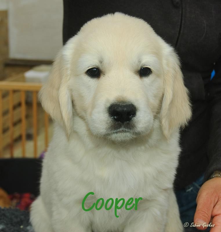 Cooper2